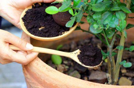 راههای خلاقانه برای استفاده از پودر و تفاله قهوه